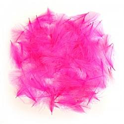 CDC - Pink