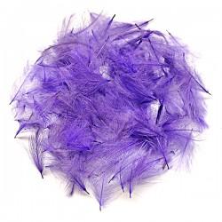 CDC - Violet