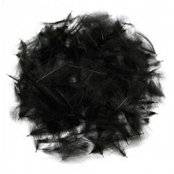 CDC - Black