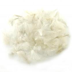 CDC - White Gray (natural)